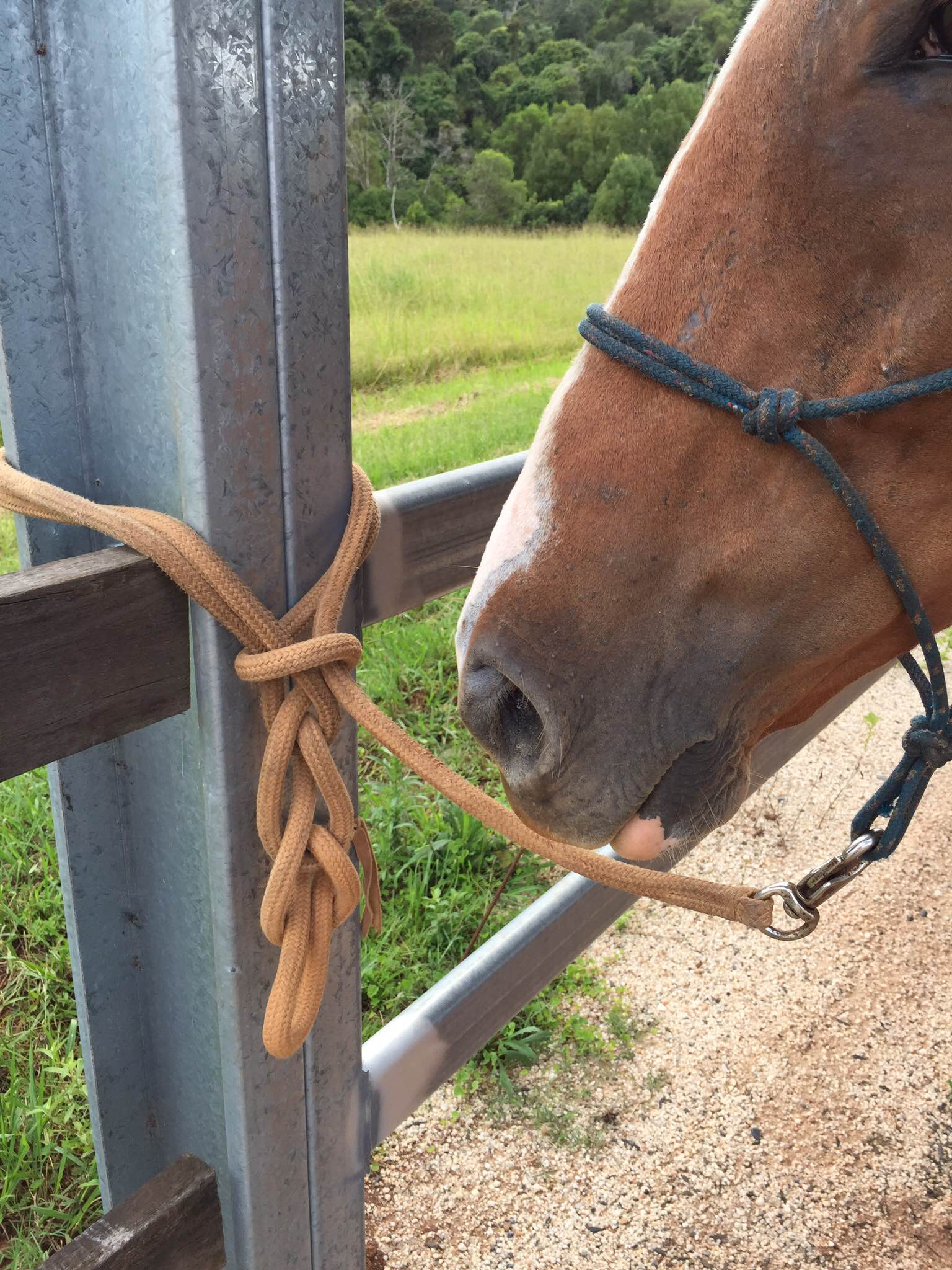 What Knot To Know To Safely Secure Your Horse