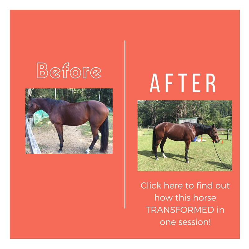 How to transform your horse – mind, body and spirit