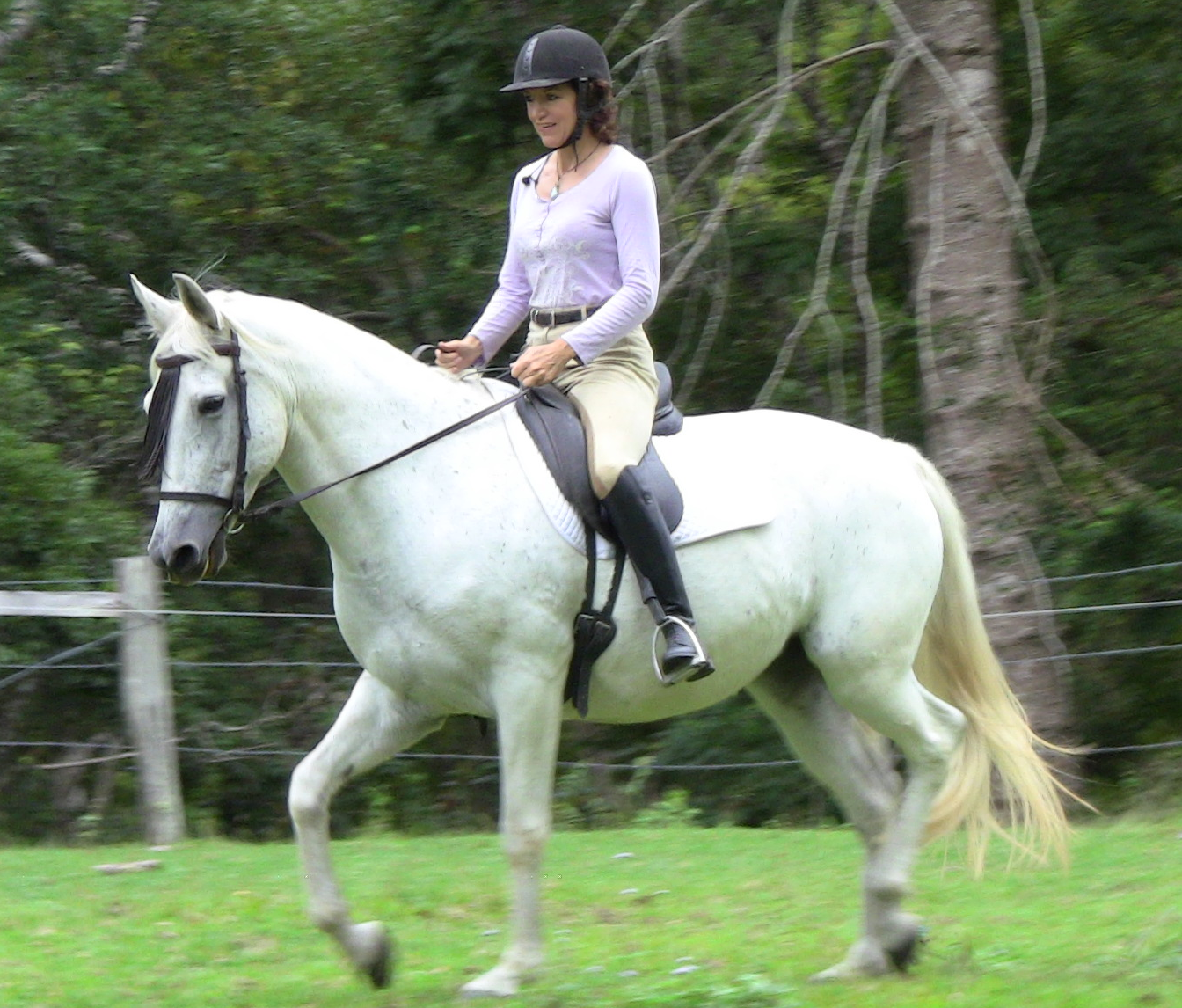 Getting The Success You Want With Your Horse