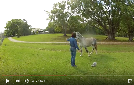 How To Positively Influence Your Horse for Great Results
