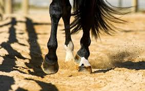Do Your Horse's Circles Look More Like Eggs?